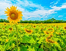 Photo of Sunflower of TN